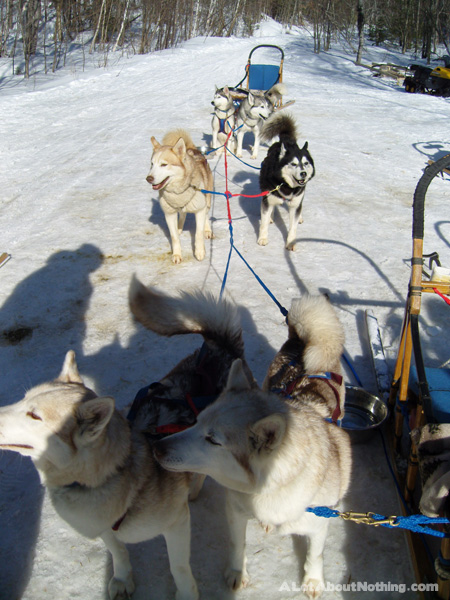 Our dog sled team